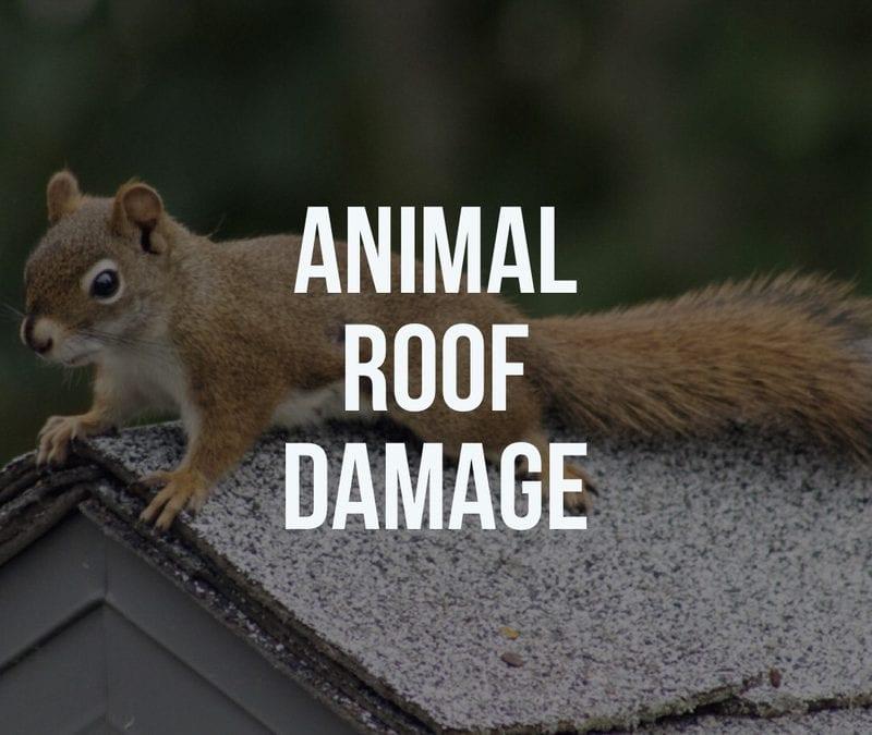 Animal Roof Damage