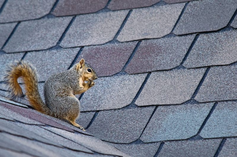 Roof Repair vs. Saving Money with a Brand New Roof: Is Your Roof Energy Efficient?